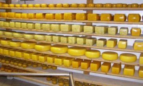 Käseherstellung Hielscher Hof