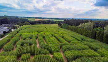 Maislabyrinth Hielscher Hof